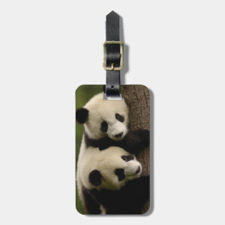 Giant panda babies (Ailuropoda melanoleuca) 2 Bag Tag