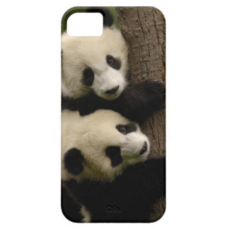 Giant panda babies (Ailuropoda melanoleuca) 2 Barely There iPhone 5 Case