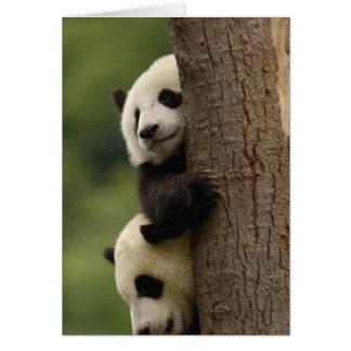 Giant panda babies Ailuropoda melanoleuca 2 Greeting Cards