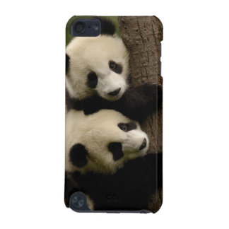 Giant panda babies (Ailuropoda melanoleuca) 2 iPod Touch 5G Case