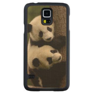 Giant panda babies (Ailuropoda melanoleuca) 2 Maple Galaxy S5 Slim Case