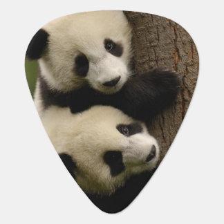Giant panda babies (Ailuropoda melanoleuca) 2 Plectrum