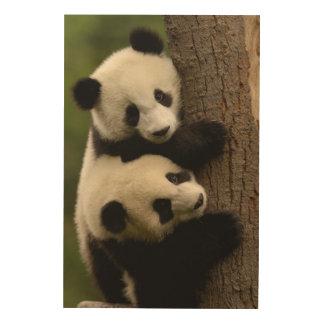 Giant panda babies (Ailuropoda melanoleuca) 2 Wood Canvases