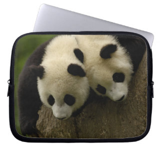Giant panda babies (Ailuropoda melanoleuca) 3 Laptop Sleeve