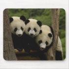 Giant panda babies Ailuropoda melanoleuca) 3 Mouse Mat