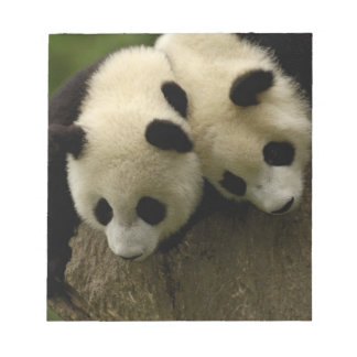 Giant panda babies (Ailuropoda melanoleuca) 3 Notepad