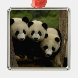 Giant panda babies Ailuropoda melanoleuca) 3 Silver-Colored Square Decoration