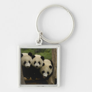 Giant panda babies Ailuropoda melanoleuca) 3 Silver-Colored Square Key Ring