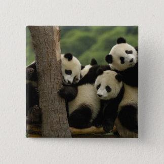 Giant panda babies Ailuropoda melanoleuca) 4 15 Cm Square Badge