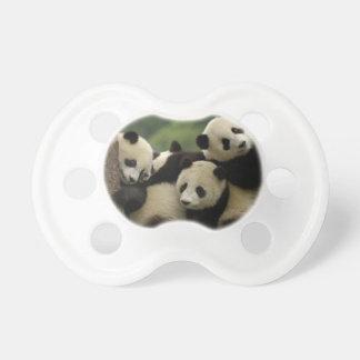 Giant panda babies Ailuropoda melanoleuca) 4 Baby Pacifier