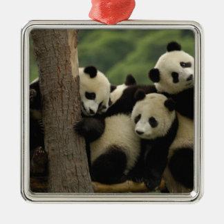 Giant panda babies Ailuropoda melanoleuca) 4 Christmas Ornament