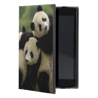 Giant panda babies Ailuropoda melanoleuca) 4 Cover For iPad Mini