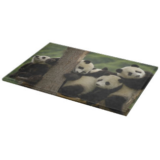 Giant panda babies Ailuropoda melanoleuca) 4 Cutting Board
