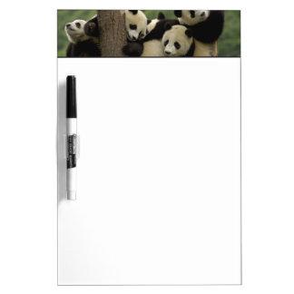 Giant panda babies Ailuropoda melanoleuca) 4 Dry Erase Board