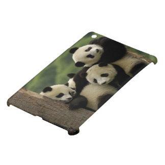 Giant panda babies Ailuropoda melanoleuca) 4 iPad Mini Case