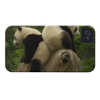 Giant panda babies (Ailuropoda melanoleuca) 4 iPhone 4 Case-Mate Cases