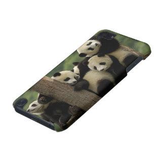 Giant panda babies Ailuropoda melanoleuca) 4 iPod Touch 5G Cover