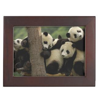 Giant panda babies Ailuropoda melanoleuca) 4 Keepsake Box
