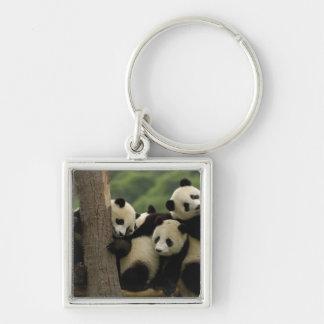 Giant panda babies Ailuropoda melanoleuca) 4 Key Chains
