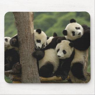 Giant panda babies Ailuropoda melanoleuca) 4 Mouse Mat