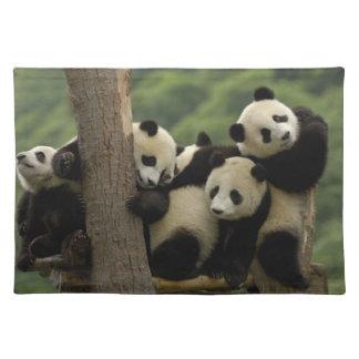 Giant panda babies Ailuropoda melanoleuca) 4 Placemats
