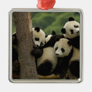 Giant panda babies Ailuropoda melanoleuca) 4 Silver-Colored Square Decoration