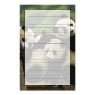 Giant panda babies Ailuropoda melanoleuca) 4 Stationery