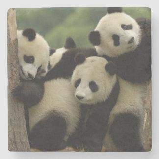 Giant panda babies Ailuropoda melanoleuca) 4 Stone Coaster