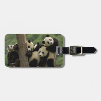 Giant panda babies Ailuropoda melanoleuca) 4 Tags For Luggage