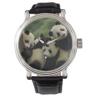 Giant panda babies Ailuropoda melanoleuca) 4 Watch