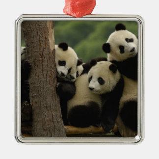 Giant panda babies Ailuropoda melanoleuca) 5 Christmas Ornament