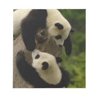 Giant panda babies (Ailuropoda melanoleuca) 5 Notepad