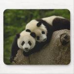 Giant panda babies Ailuropoda melanoleuca) 6 Mouse Pad