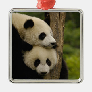 Giant panda babies Ailuropoda melanoleuca) 7 Silver-Colored Square Decoration