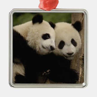 Giant panda babies Ailuropoda melanoleuca) 8 Christmas Ornament