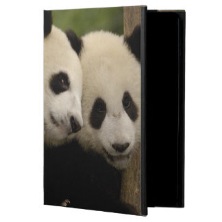 Giant panda babies Ailuropoda melanoleuca) 8 Cover For iPad Air