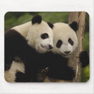 Giant panda babies Ailuropoda melanoleuca) 8 Mouse Mat
