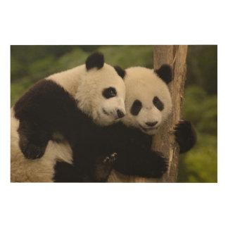 Giant panda babies Ailuropoda melanoleuca) 8 Wood Prints