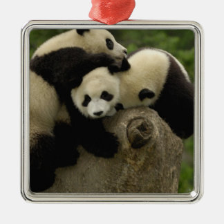 Giant panda babies Ailuropoda melanoleuca) 9 Silver-Colored Square Decoration