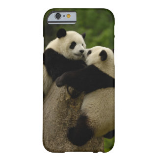Giant panda babies (Ailuropoda melanoleuca) Barely There iPhone 6 Case