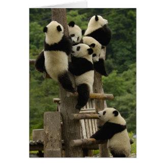Giant panda babies Ailuropoda melanoleuca) Greeting Cards