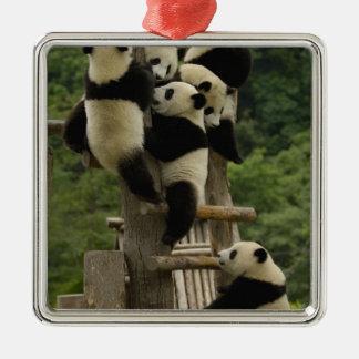 Giant panda babies Ailuropoda melanoleuca) Christmas Ornament