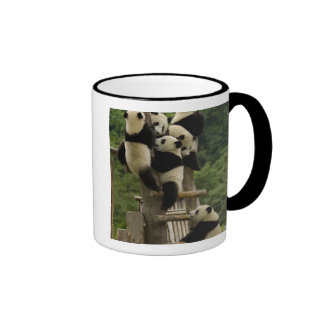Giant panda babies Ailuropoda melanoleuca) Mugs