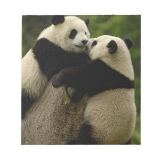 Giant panda babies (Ailuropoda melanoleuca) Notepad