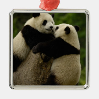 Giant panda babies (Ailuropoda melanoleuca) Silver-Colored Square Decoration