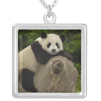 Giant panda baby Ailuropoda melanoleuca) 11 Silver Plated Necklace