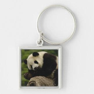 Giant panda baby Ailuropoda melanoleuca) 12 Key Chains