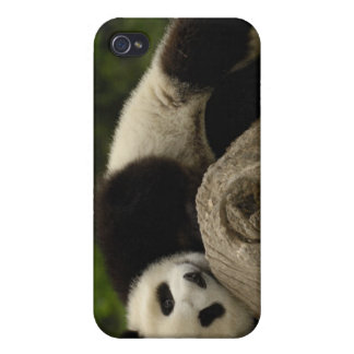 Giant panda baby Ailuropoda melanoleuca) 13 Cover For iPhone 4