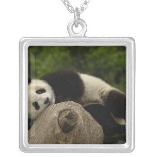Giant panda baby Ailuropoda melanoleuca) 13 Silver Plated Necklace