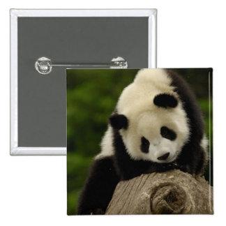 Giant panda baby (Ailuropoda melanoleuca) 2 15 Cm Square Badge